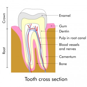 Sensitive Teeth Root Canals In Lacey Can Cure Your Pain